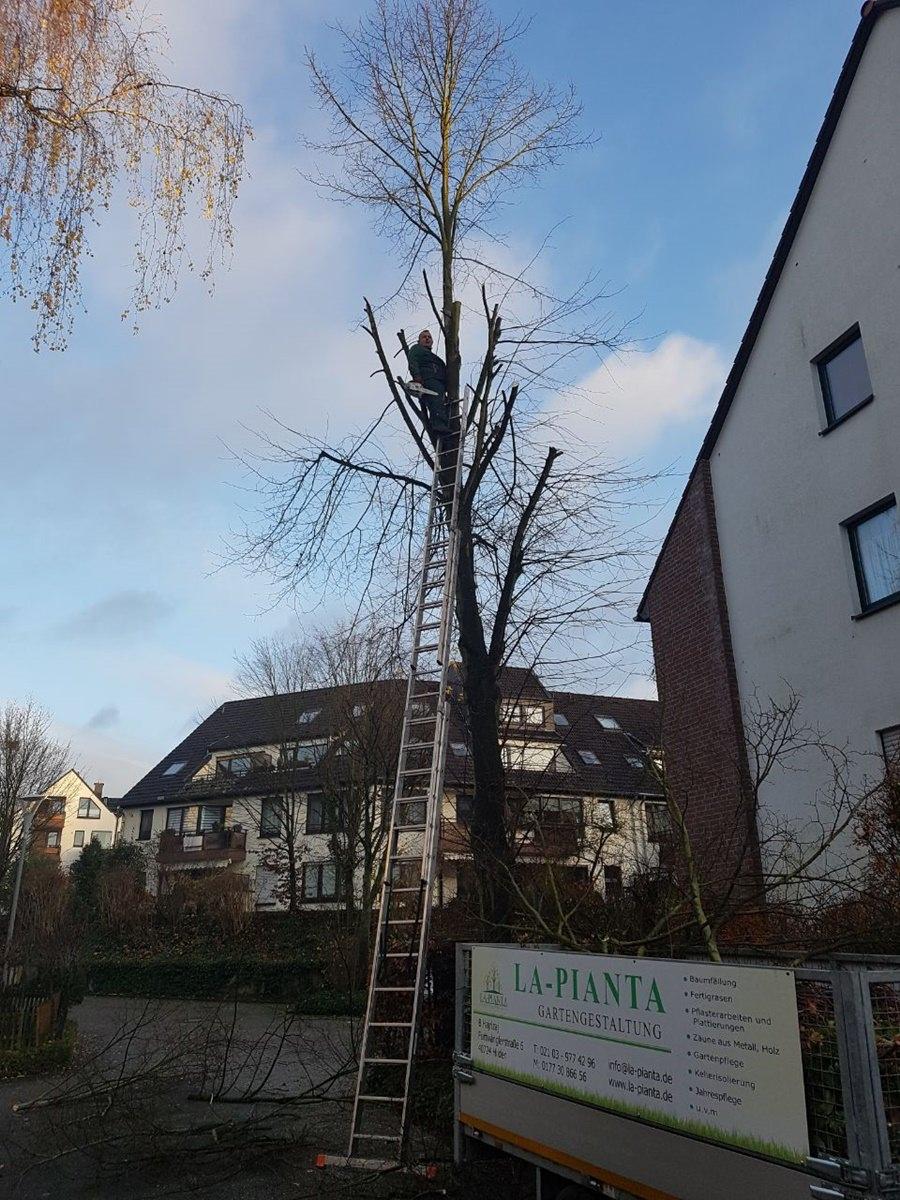 Baumfällung_Düsseldorf